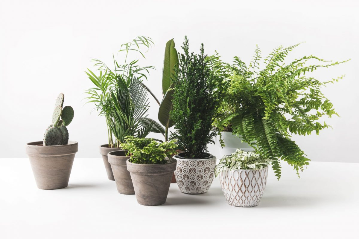 Plants for your new garden room